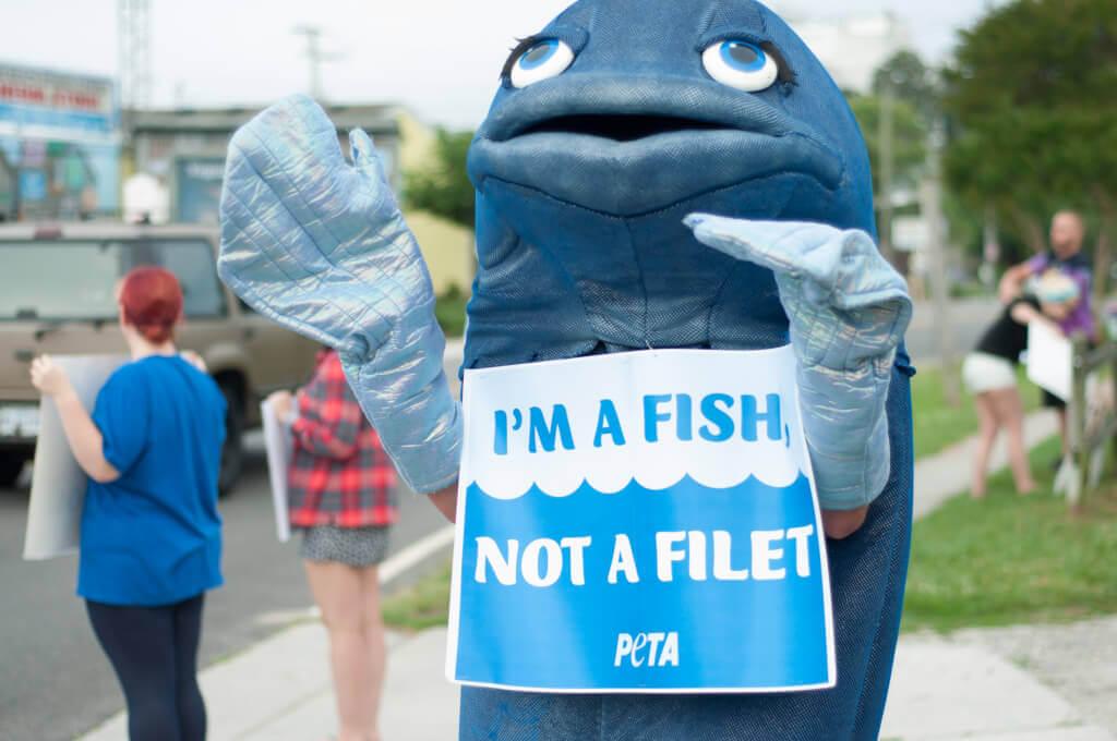 Fishing Demo with Freeda Fish