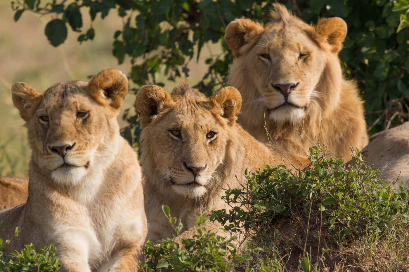 Hunting Outfit's Buy-One-Get-One-Free Lions: Help End This | PETA
