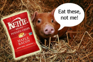 Maple Bacon Kettle Chips and Pig