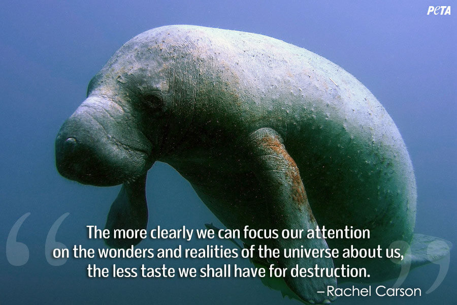 PETA-Aquarium-Feature-Quote-02-manatee (1)