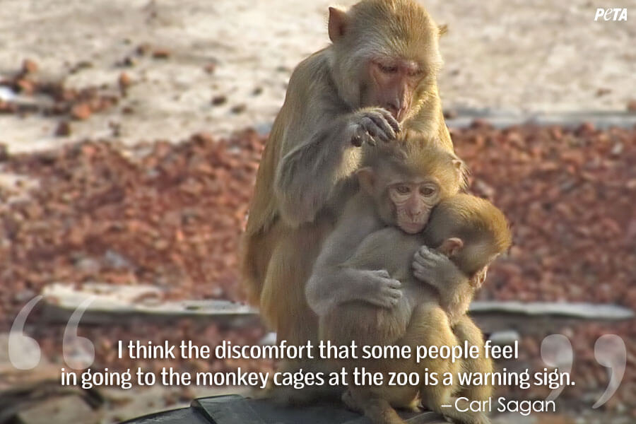 PETA-Aquarium-Feature-Quote-03-monkeys