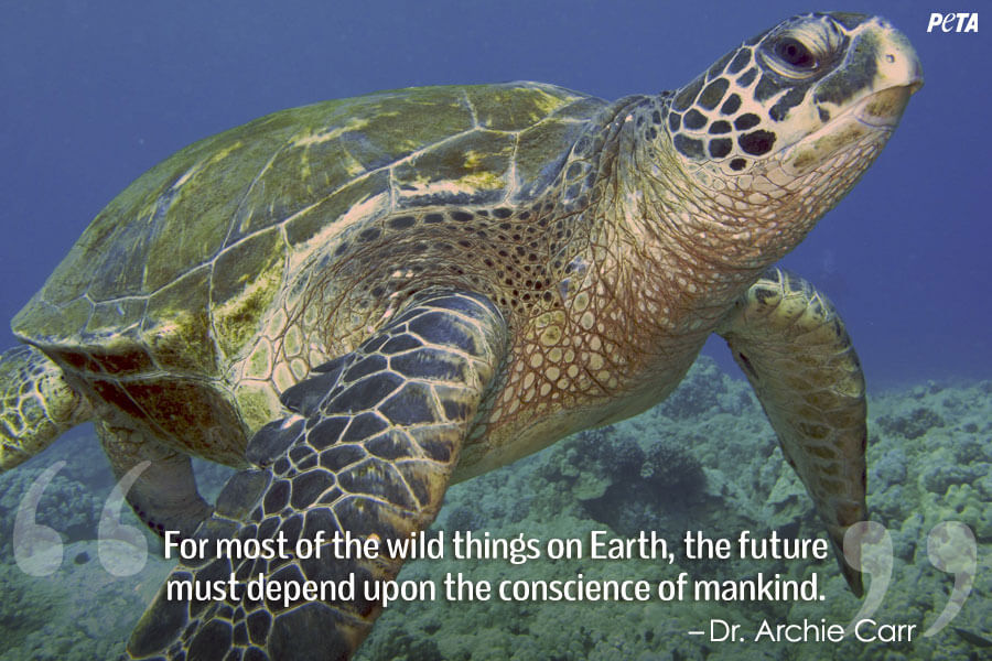 PETA-Aquarium-Feature-Quote-05-seaTurtle