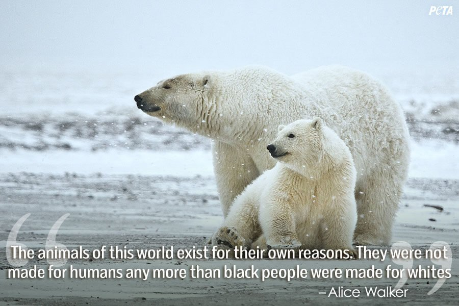 9 Quotes That Will Change What You Think About Zoos Peta