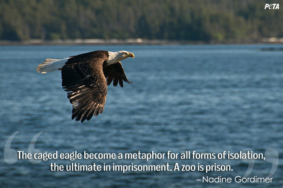PETA-Aquarium-Feature-Quote-09-eagle