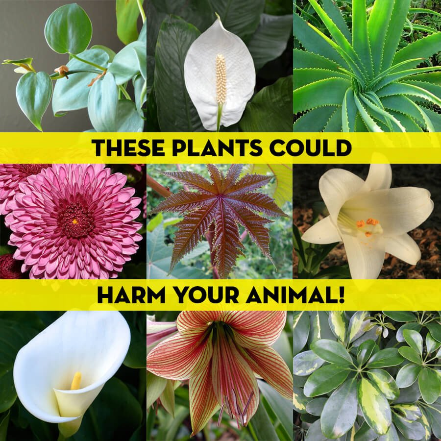 PETALiving-These-Plants-Could-Harm-Your-Animal-900
