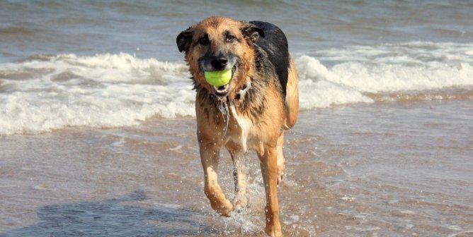 10 Dog Beach Necessities