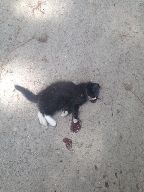 Kitten Hit by Car (graphic)
