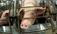 Sorry, Big Ag: PETA, ALDF 'Ag-Gag' Lawsuit Gets Green Light