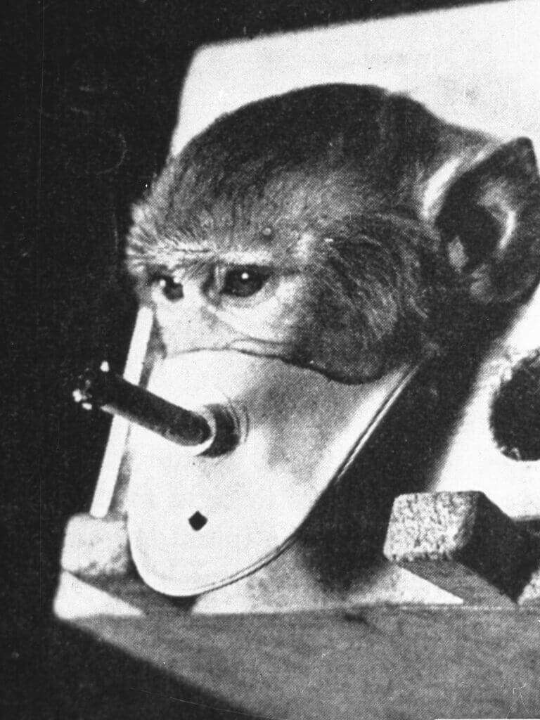 smoking-monkey