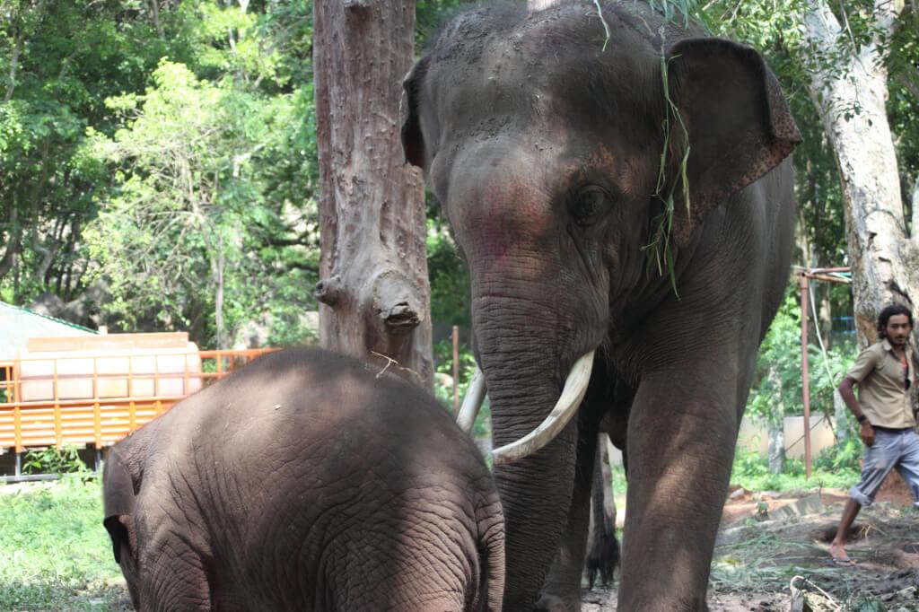 Sunder with Baby Elephant Shiva