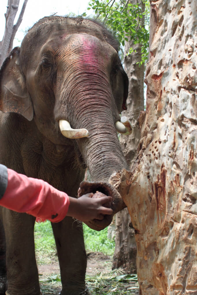 Sunder Grabs a Coconut