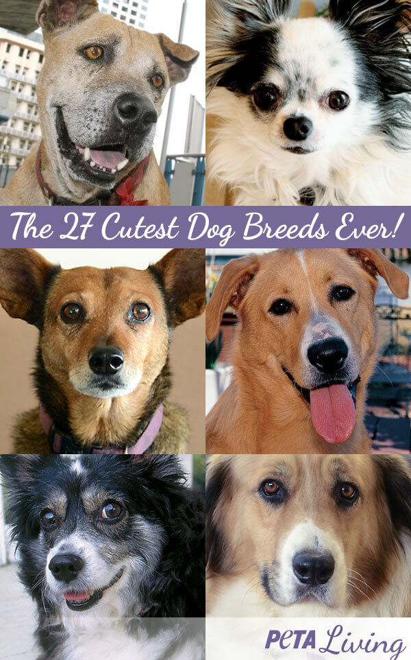 27 Cutest Dog Breeds Share Able Image