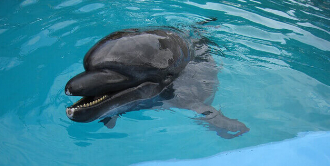 Self-Isolation Got You Feeling Trapped? Try Being a Dolphin at SeaWorld