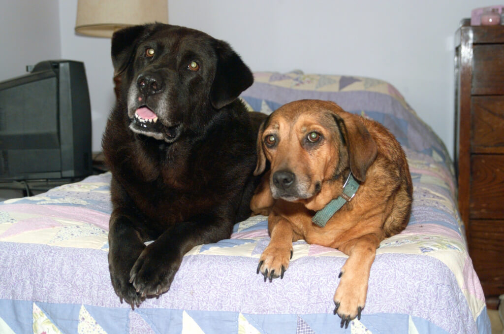 two dogs lying on a bed