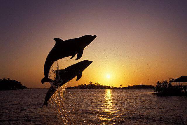 Bottlenosed Dolphins in Honduras