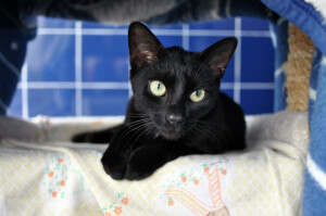 Licorice Needs a New Home
