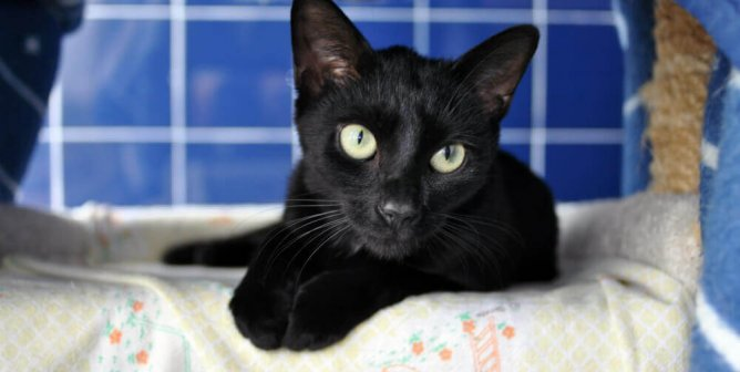 13 Lucky Black Cats