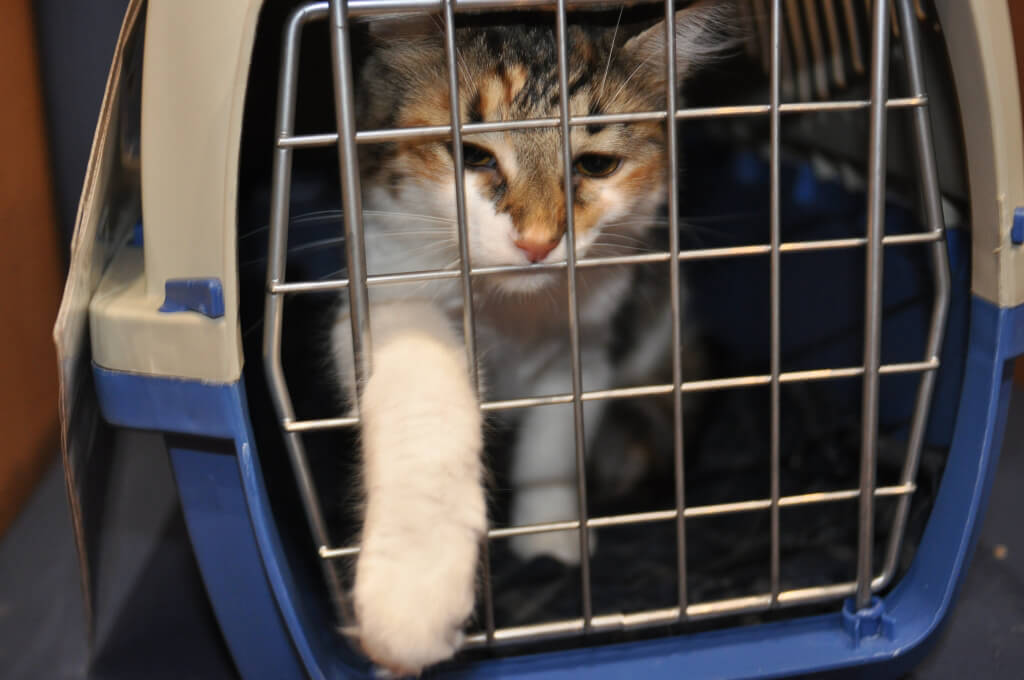 Cat in Carrier at PETA's Mobile Clinic