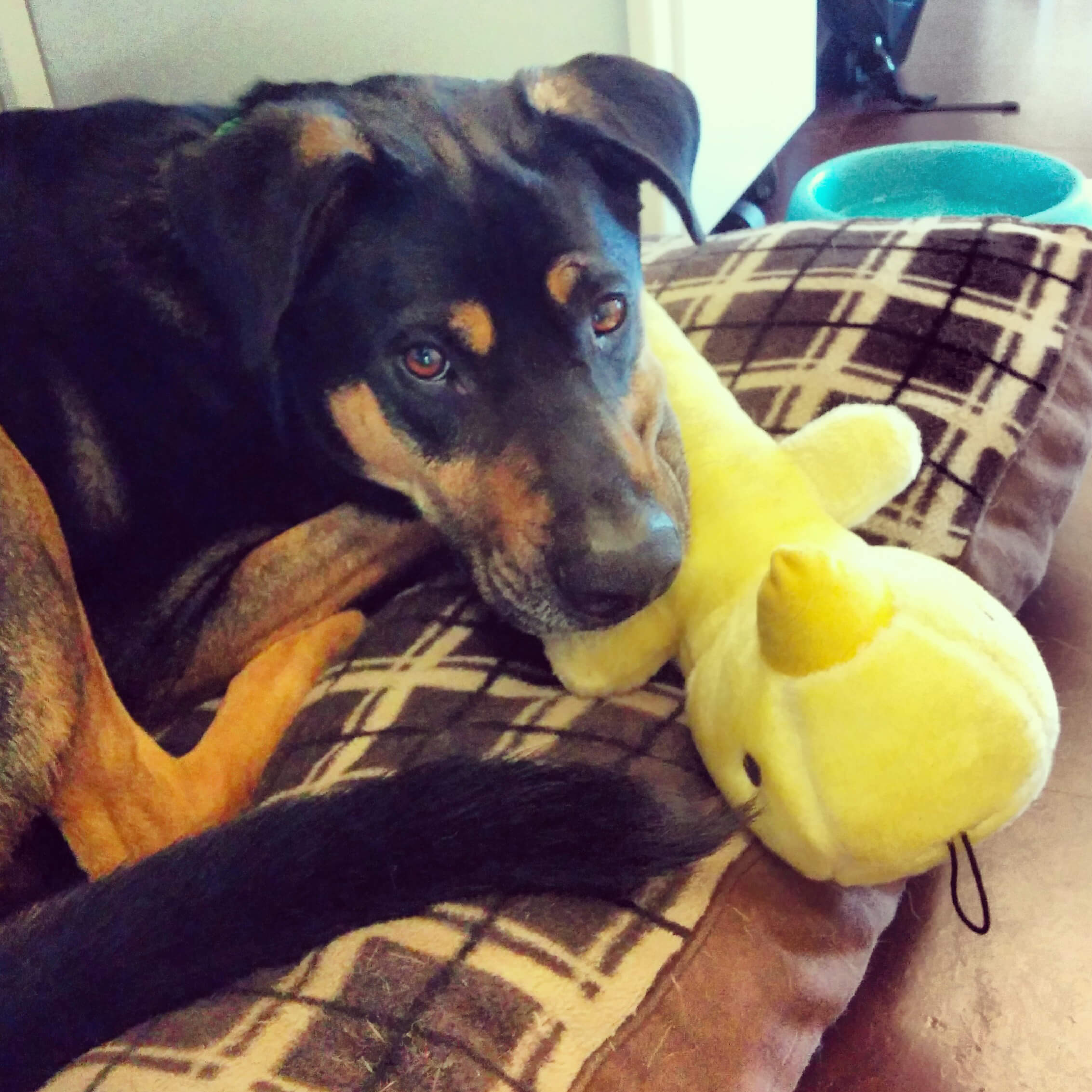 5 Reasons Your Dog Doesn t Want to Be Left at Home