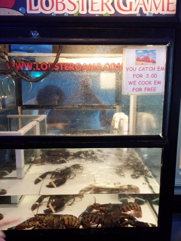 Lobsters in Arcade Game