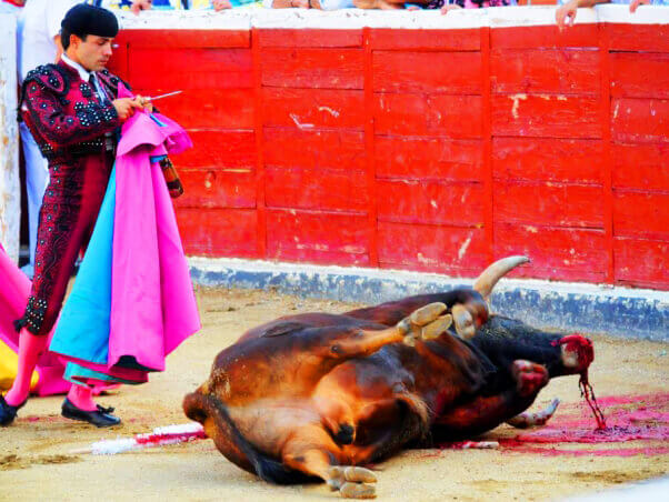 Matador Standing Over Dying Bull at the Bullfight