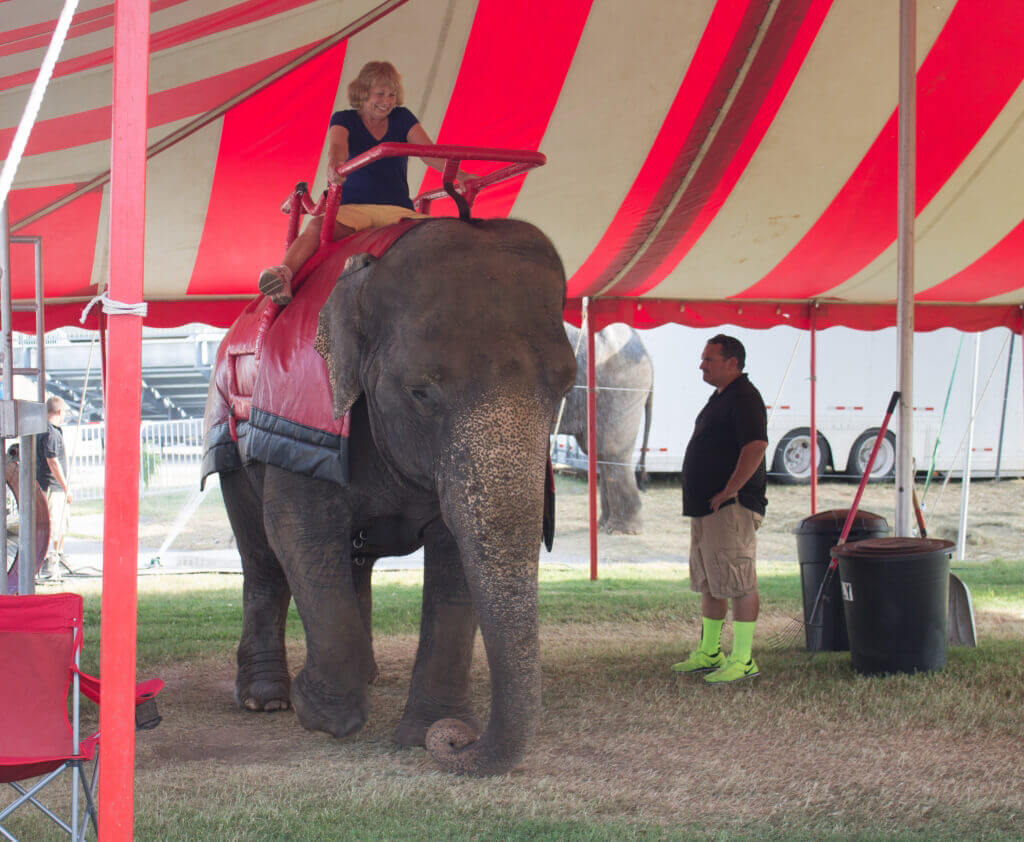 elephant-rides