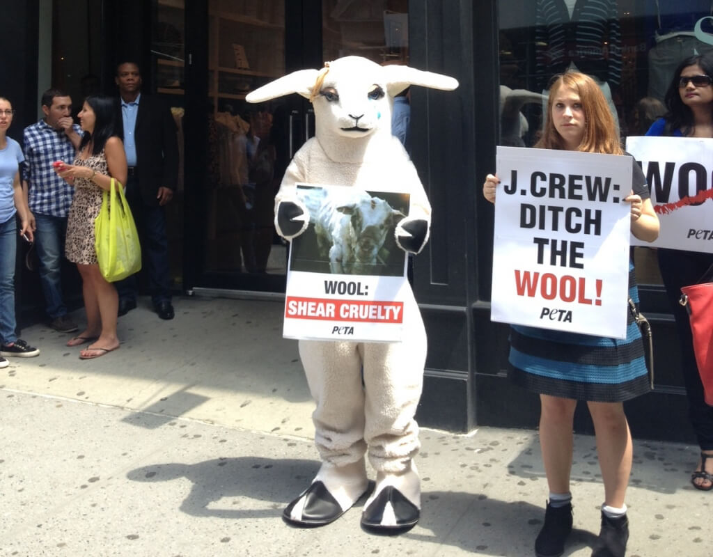 Sheep at J.Crew Wool Protest