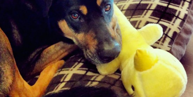 5 Reasons Your Dog Doesn't Want to Be Left at Home