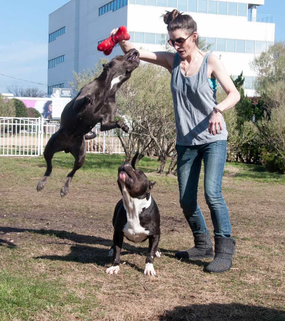 Rescues Dallas and Diamond Having Fun at PETA's Bea Arthur Park