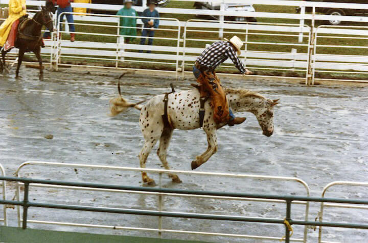 never go to a rodeo - here's why