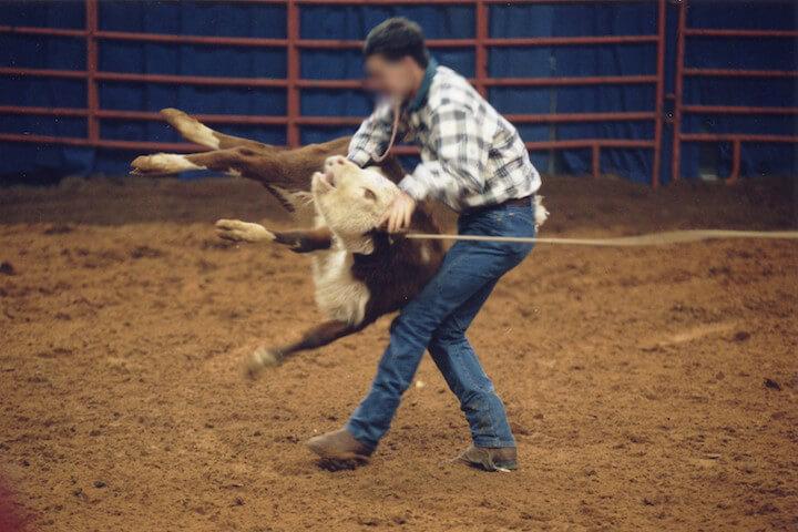 man abusing calf at rodeo