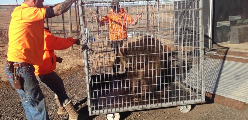 Black Forest Bear Park Rescue