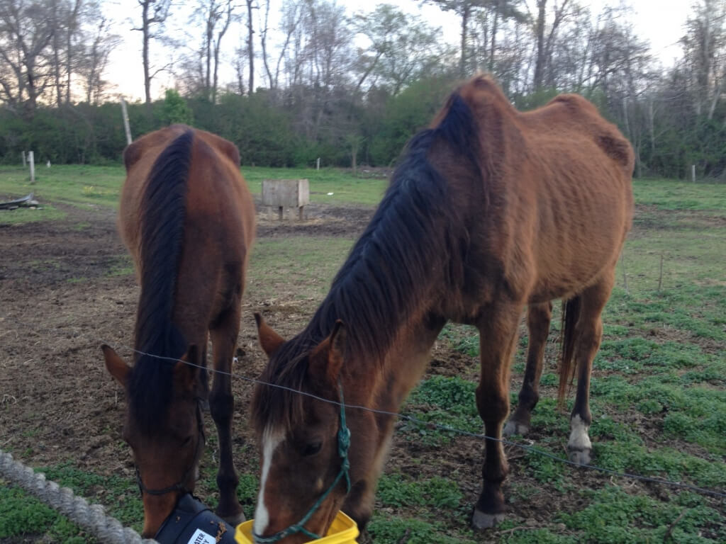 Abused Horses Find Their Field Of Dreams  Photos