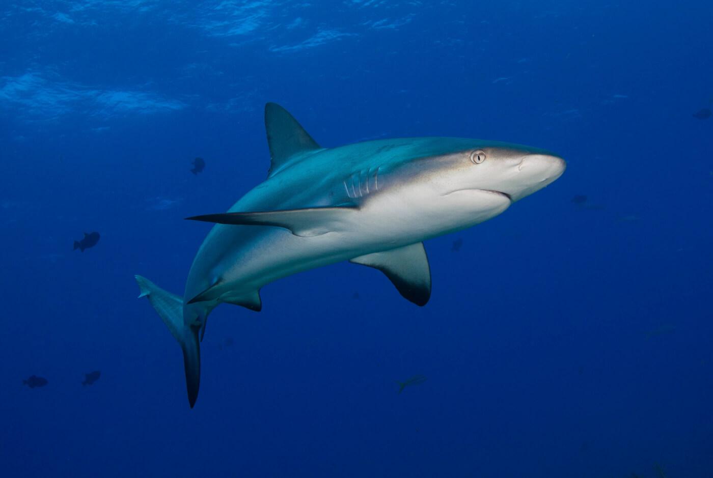 angler hooks shark shark bites man time to ban fishing peta