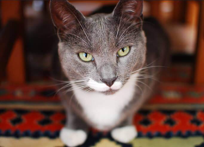 Cat Judging
