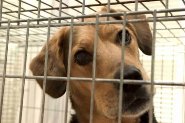 Close-up of brown dog in crate