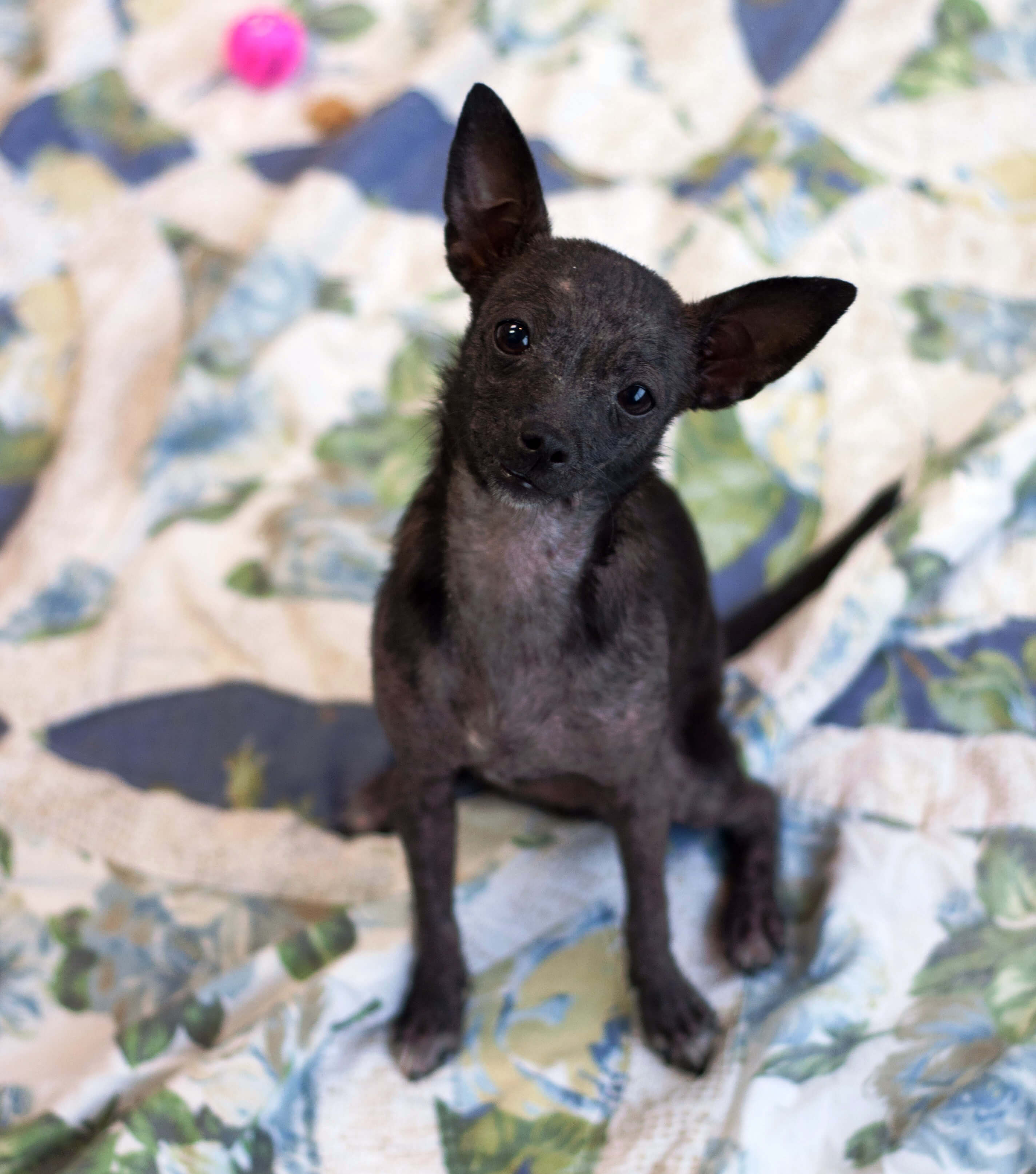 is this a dog or a fruit bat peta
