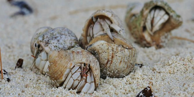 7 Reasons Why You Should Never Buy a Hermit Crab | PETA