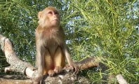 After 10 Years in Solitary, Monkey Gets 'Parole'