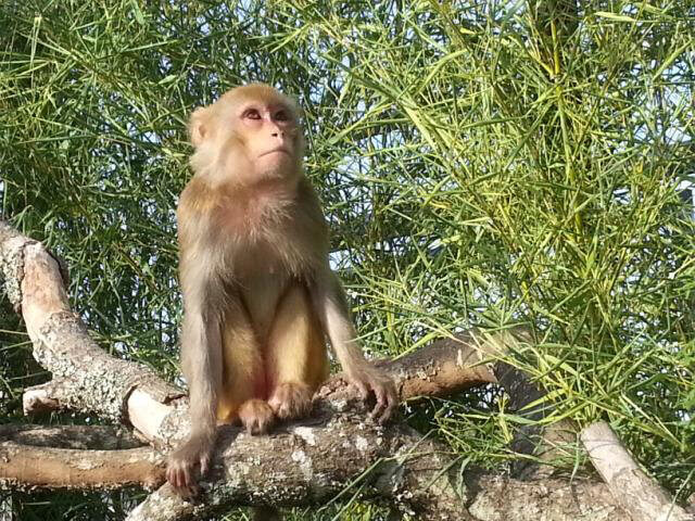 Maggie the Macaque at Wildlife Rescue & Rehabilitation Sanctuary
