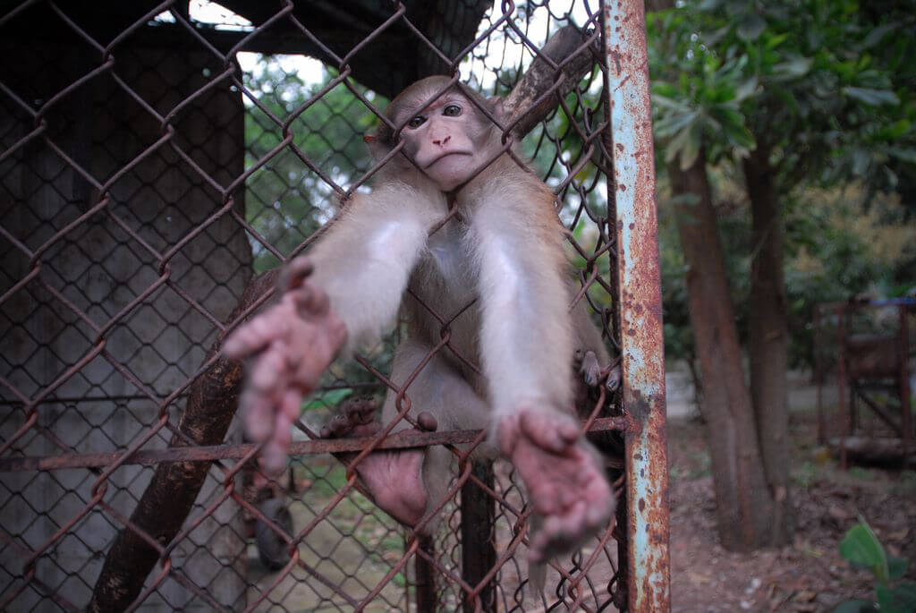 Monkey reaching out from her cage