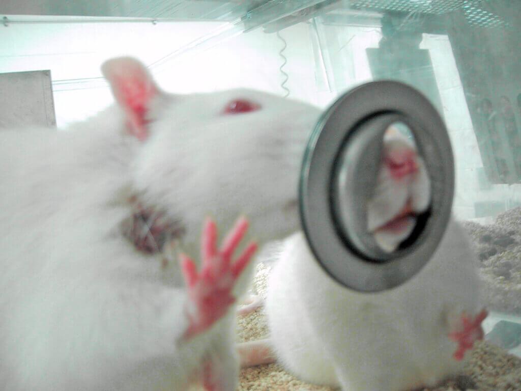 is animal testing cruel?