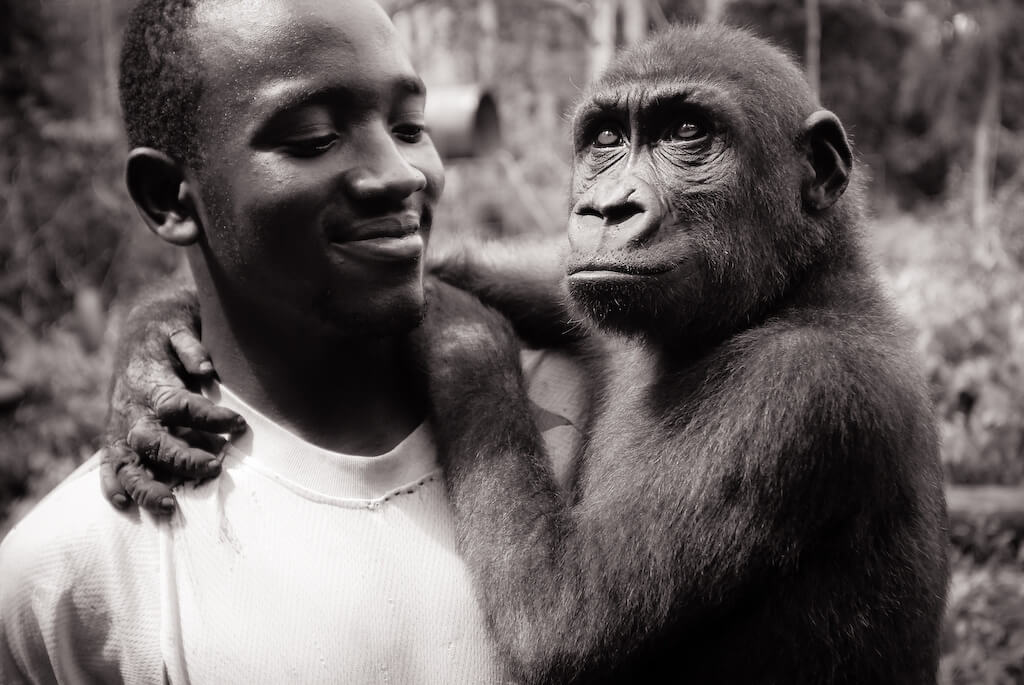 Thierry holding happy baby gorilla