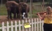 No, These Elephants Aren't Dancing