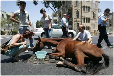 haifa_horse