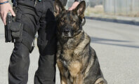 When the Protectors Need Protecting: Cruelty to K-9s