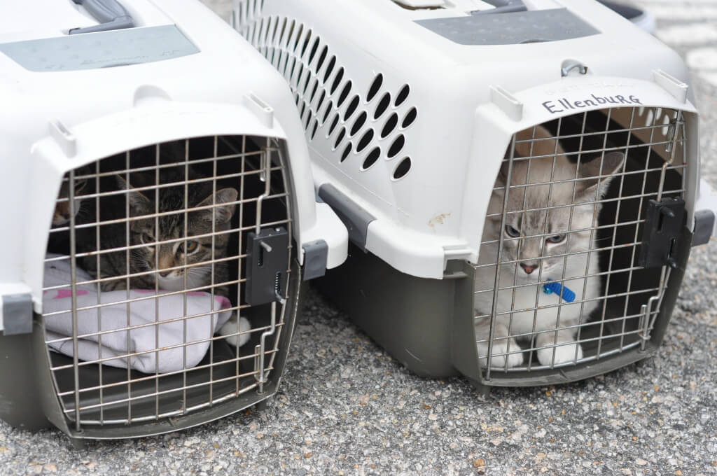 Cats in Carriers at PETA's Mobile Clinic
