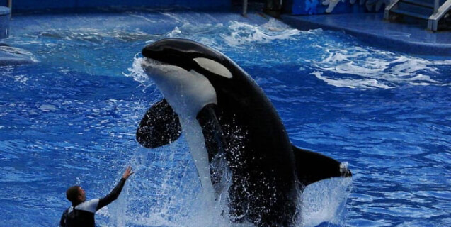 Urge Richard Branson and Virgin to Stop Promoting SeaWorld