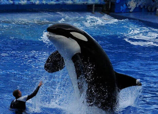 Victory! Virgin Holidays Cuts Ties With SeaWorld and Other Dolphin 'Abusement' Parks