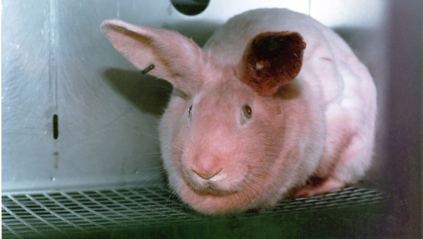 Animals Used for Experimentation Factsheets